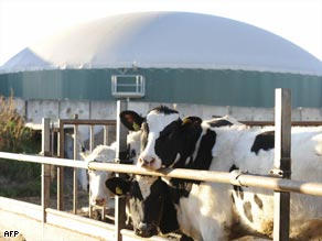 Manure has been used to produce a methane and carbon dioxide rich biogas suitable for energy production.