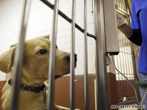 A dog looks through the door of its kennel at Battersea Dogs and Cats Home in London.