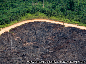 The rainforests in Borneo, Southeast Asia are being swept aside to make way for palm oil.