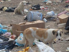 A stray puppy sits in a Baghdad neighborhood this week.