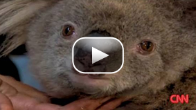 Sam, the koala, gets a visit from the firefighter that found her in a burnt Victorian forest.