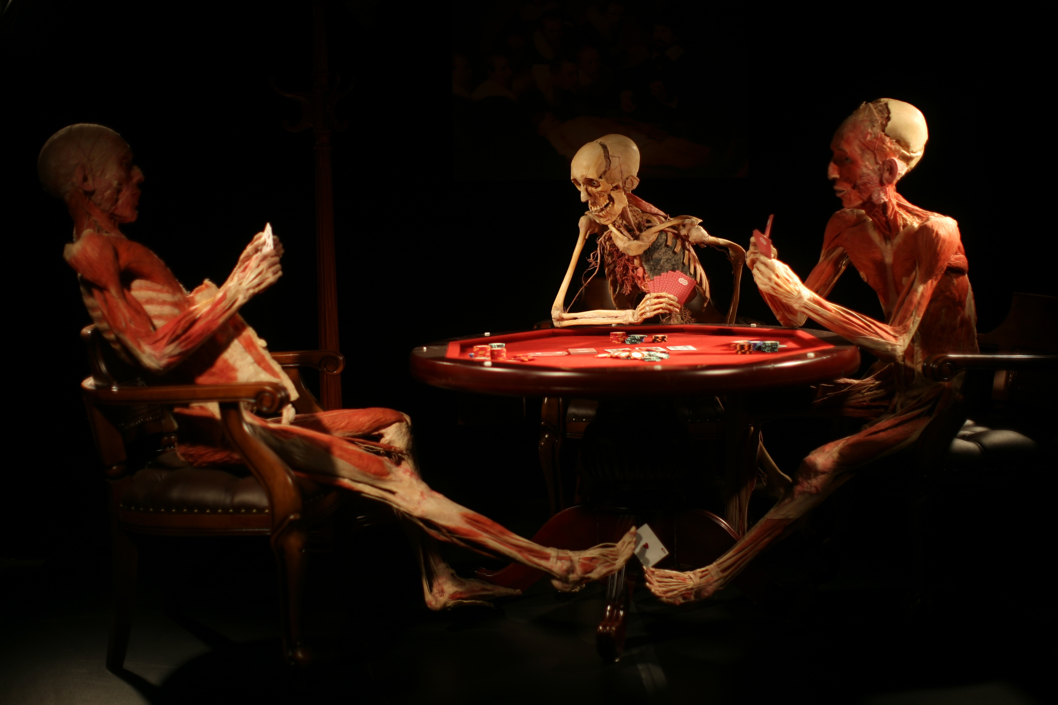 Uriel Sinai/Getty Images. Plastinated bodies are posed up around a poker table at the 'Body Worlds' international exhibit April 6, 2009 in the northern Israeli city of Haifa . Haifa's Cheif Rabbi She'ar-Yashuv Cohen has called on the public to boycott the exhibition due to issues relating to kavod adam (human dignity) and Halacha (Jewish law) of burying a corpse. Dr Gunther von Hagens' travelling exhibition of plastinated human bodies and body parts will be on display in Israel for about three months.