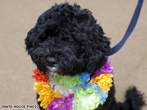 Bo, a six-month old Portuguese water dog, was given to the first family by Sen. Ted Kennedy.