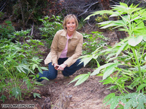 Randi Kaye kneels beside a marijuana plant on her visit to a 'marijuana garden' with a team of sheriff's deputies and officials who destroy the plants.