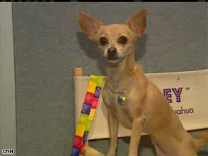 Gidget, the Chihuahua best known for her Taco Bell ad campaign, died from a stroke on Tuesday night at age 15.