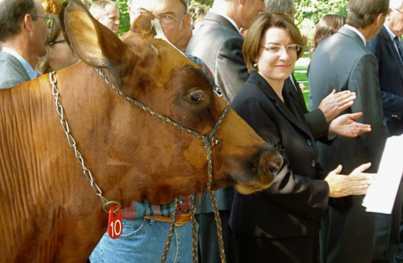 Minnesota Sen. Amy Klobuchar is joined by a cow named Maggie