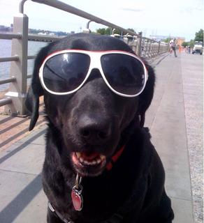 Jack Gray's dog, Sammy, in New York City.