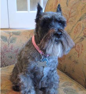 Cate Vojdik's dog, Bailey.