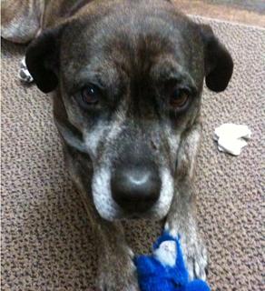 Joneil Adriano's dog, Gizmo.