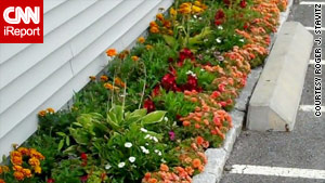Stavitz's garden cost him only $500, but his hostas and marigolds make a long-lasting impression.