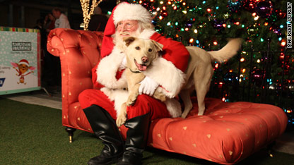 Santa and the dogs to the rescue! 