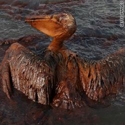 ESTADOS UNIDOS AL DIA - Página 12 T1main.oil.pelican.gi