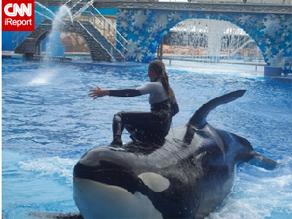 The late Dawn Brancheau trains Tillikum, a male orca at SeaWorld Orlando.