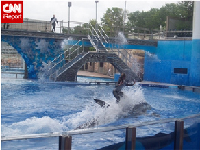 Animals in zoos, aquariums and museums, such as SeaWorld, play an important and powerful part in our cultural and formal educational processes, according to John Nightingale.