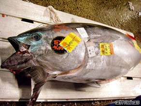 Should we ban the sale of blue fin tuna?