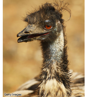 When I start talking about owning an emu ranch, you know I've been sleep deprived for too long. It's time to go home.