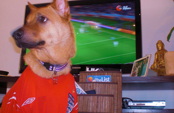 My dog, Buzz wasnt really interested in watching France vs. Uruguay. Matthew Booth/CNN.