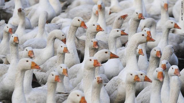 Foie gras causes uproar