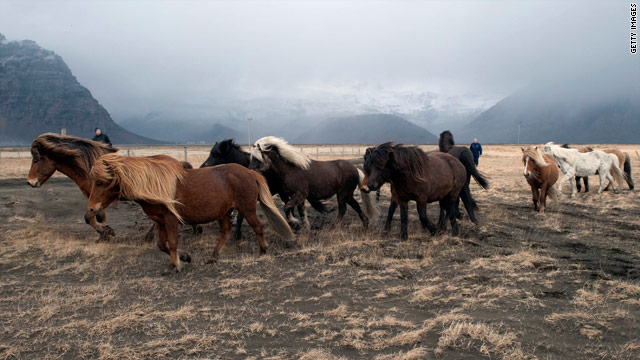 Poll – making a meal of mustang