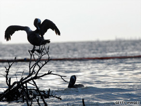 A document released by the U.S. Coast Guard this week shows a lack of cooperation from BP in providing accurate flow-rate estimates of the oil company's massive underwater gusher in the Gulf of Mexico.