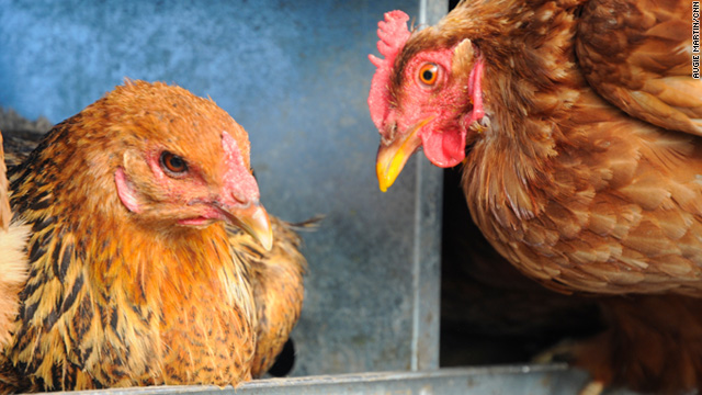 That whole chicken/egg quandary? Scientists may have it cracked