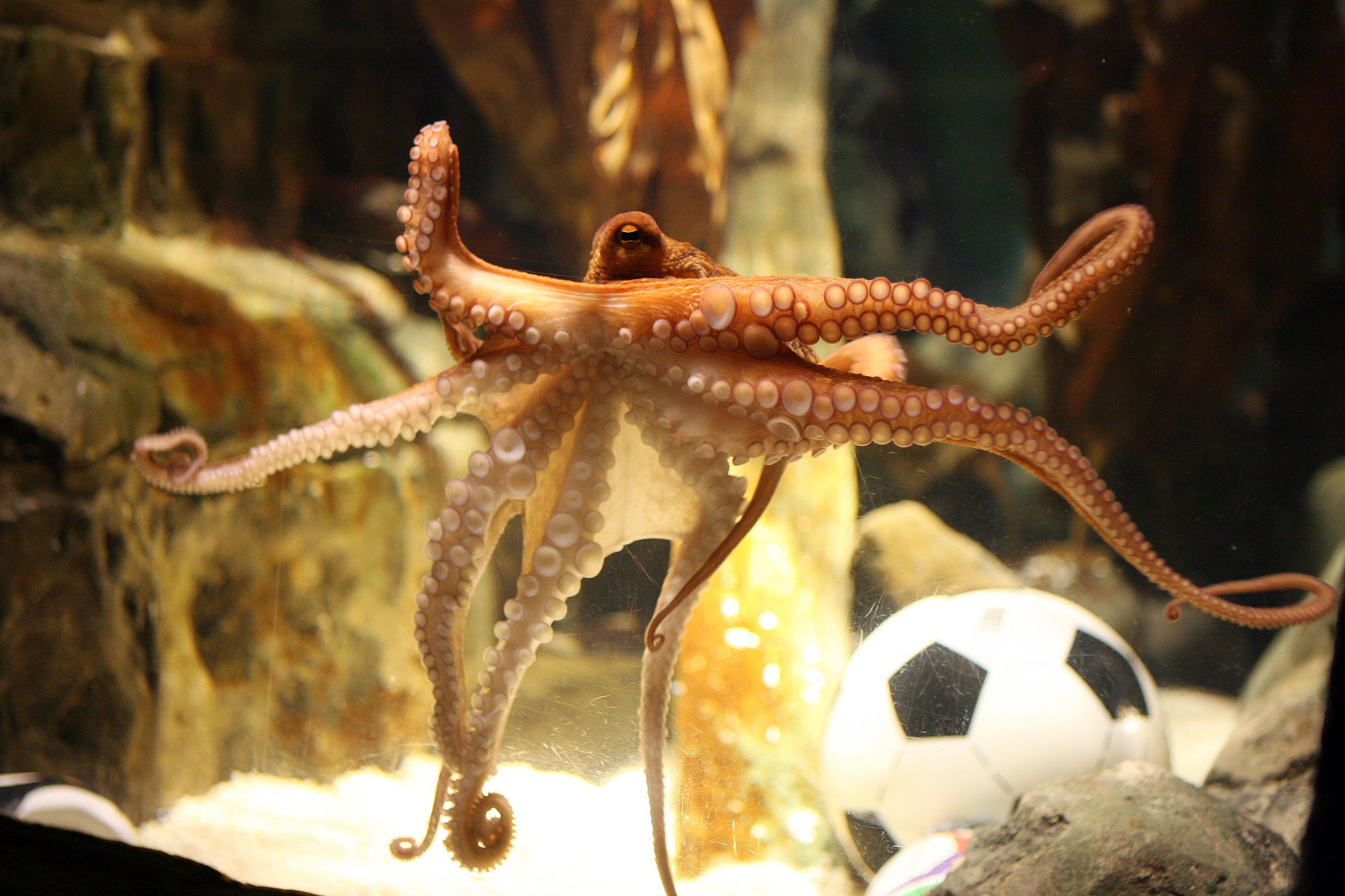 wilma flintstone and the octopus