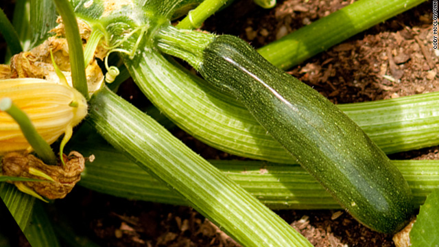 National zucchini day