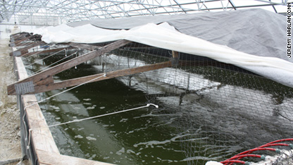 indoor shrimp farm