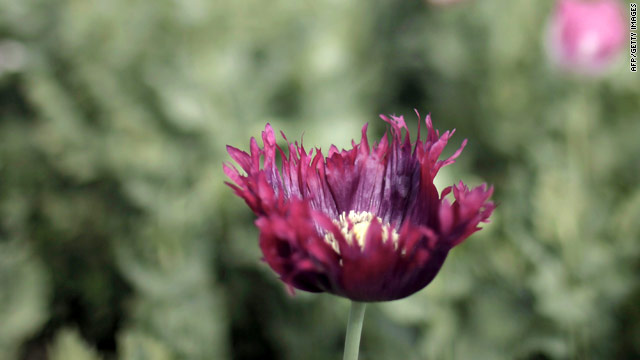 UN: Afghan opium production down