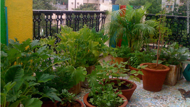 In Mumbai, rooftop gardens take root