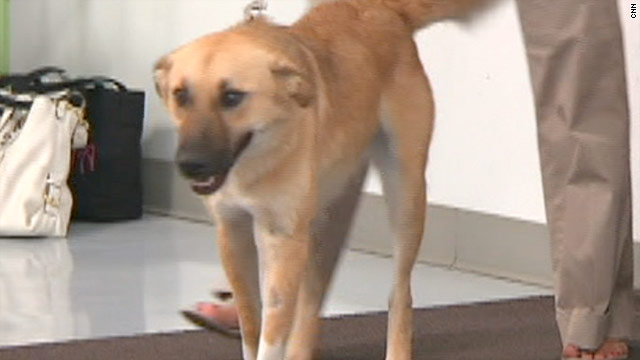 Hero Afghan dog accidentally euthanized