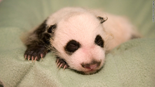 First panda born in U.S. this year 'progressing well,' 'in great shape'