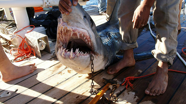 Egypt calls in shark experts after attacks