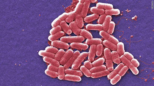Scientists create computer-programmable bacteria