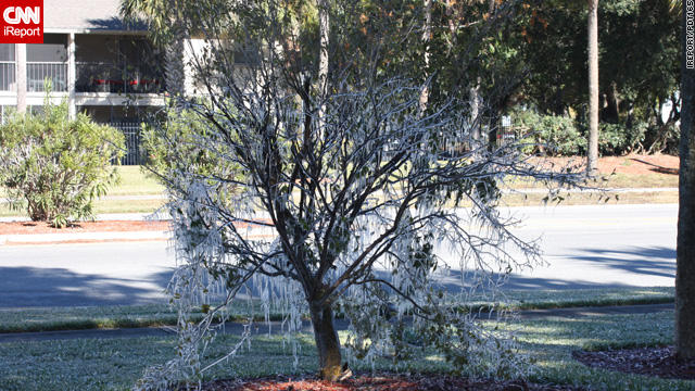 Florida's deep freeze may put fruits and vegetables in peril