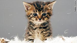 story.kitten.ts.jpg