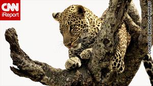 Masai Mara's wild side