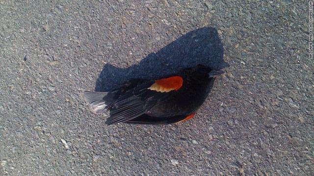 Arkansas game officials probe mystery of falling birds