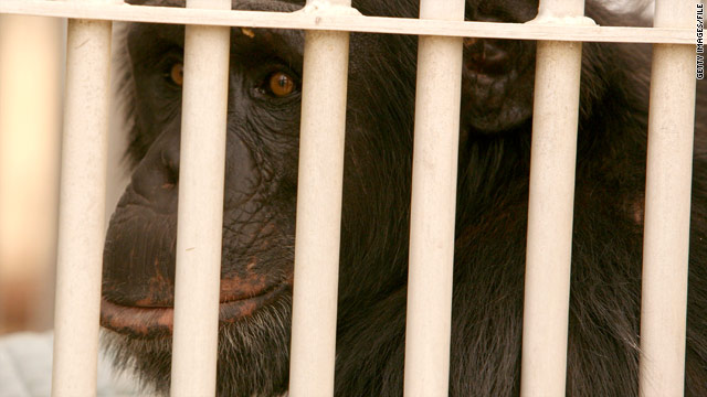 New Mexico chimps won't be used in additional research, pending review