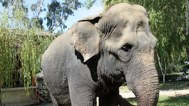 Oldest elephant in N. America dies at 71