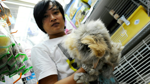 Year of the Rabbit: Deadly start for impulse pet buys