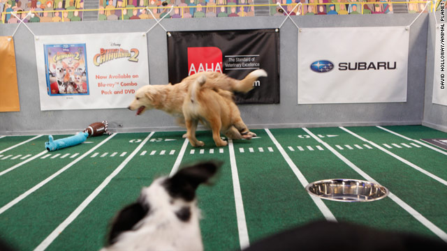 Puppy Bowl VII's lineup ready to ruff it up