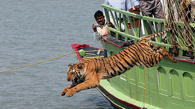 Paper: Proper land management could triple Asian tiger population