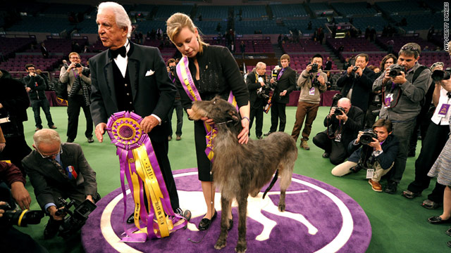 Scottish deerhound scores a first at Westminster