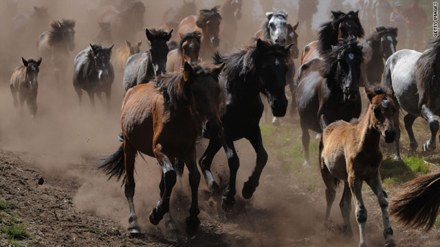 Your Congress at work: Lawmakers on contraception for wild horses