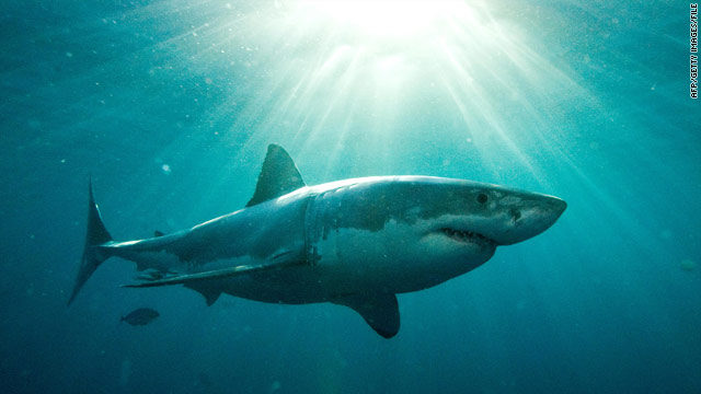 Diver apparently killed by sharks