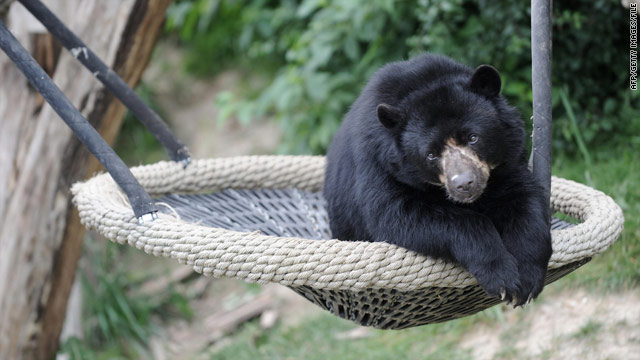 Study reveals the secret lives of bears