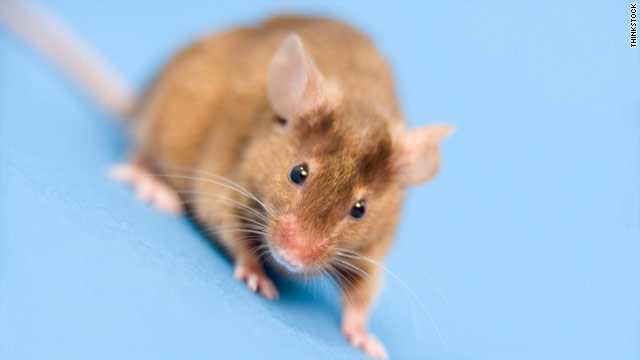 Mouse study may offer hope for infertile men