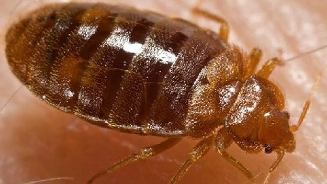 Gotta Watch: Bedbugs, dribble contest, skinny jeans