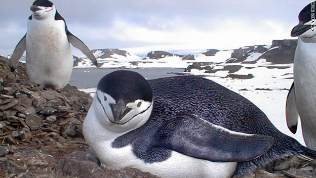 Top library complaint: Story about same-sex penguin couple